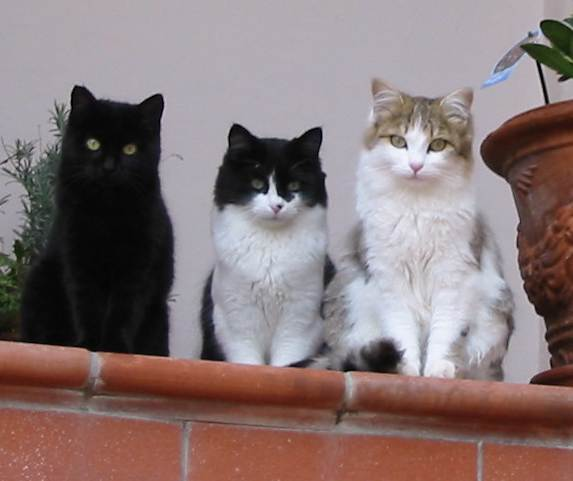 Advanced cats of Ananda Assisi